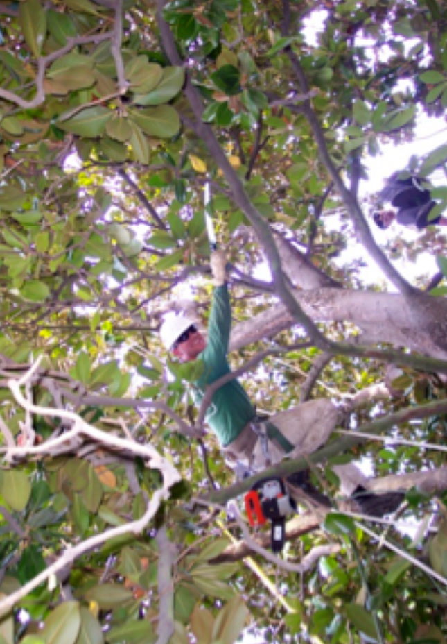 Patitucci Tree Trimming and Removal, Inc.